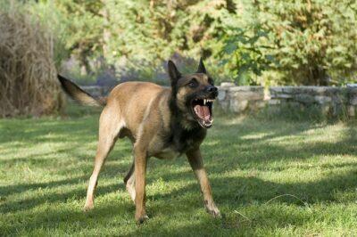 במקרה של נשיכת כלב תביעה היא הכרחית